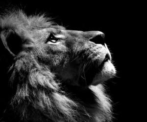 悲しいライオン