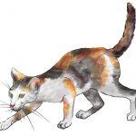猫の平均寿命は?人間だと何歳?