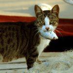 猫に療法食を食べてもらう9つのヒント