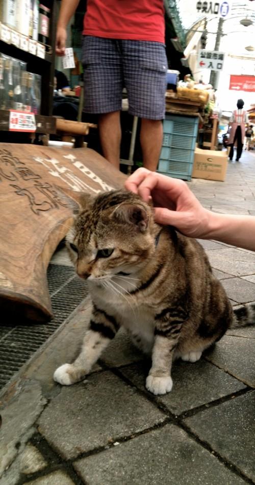 お土産屋の看板猫 沖縄
