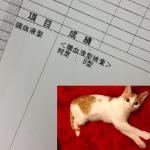猫の血液型 A?B?O?