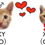 オスの三毛猫だけじゃない、確率の低い猫の毛色