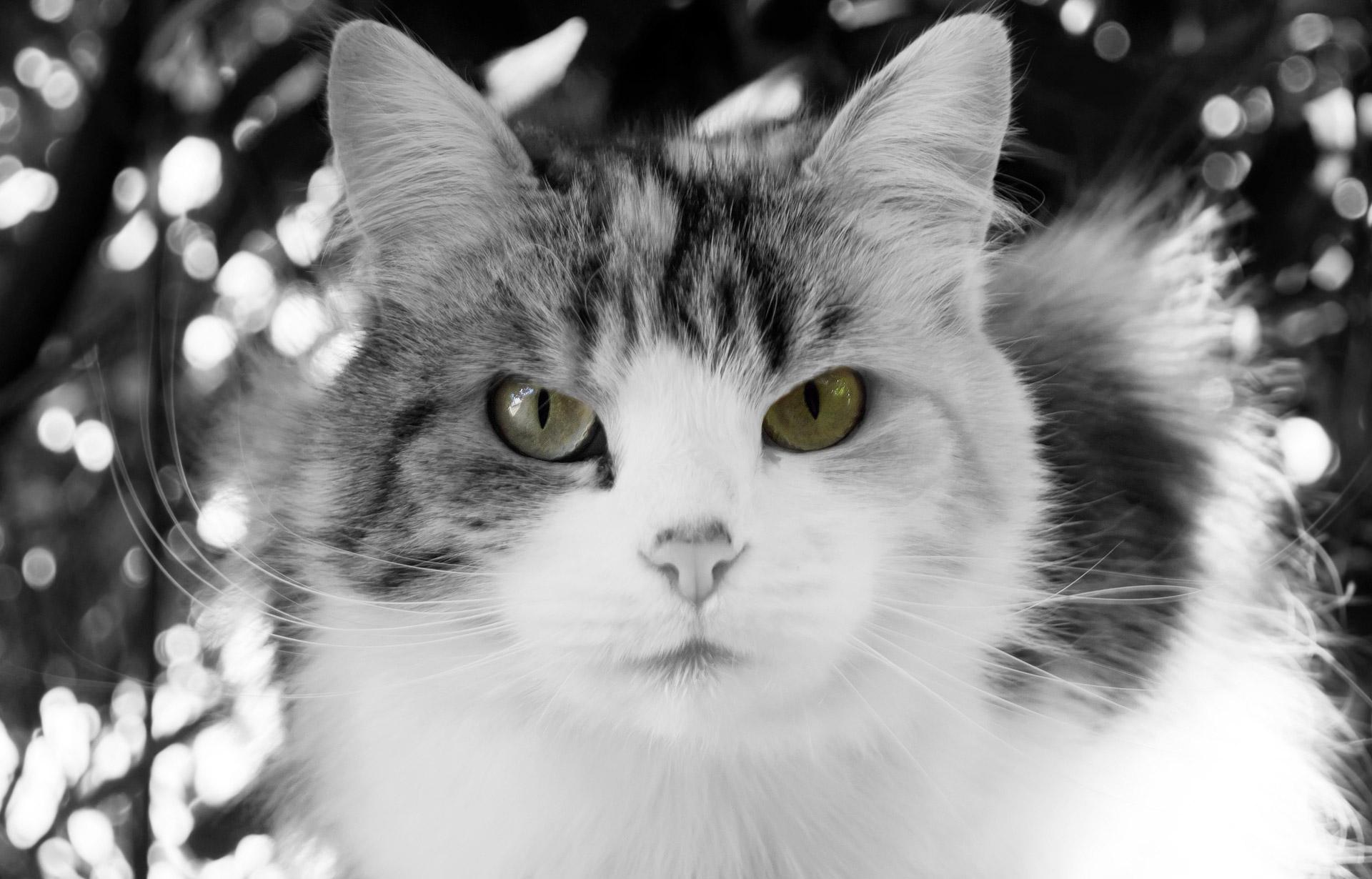 cat-1346845743F0d