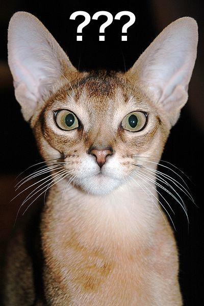 400px-Abyssinian_Cat_Portrait.Idsfa