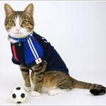 猫の利き手〜pawedness~