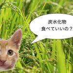 〜猫と炭水化物〜 グレインフリーフードとは何か