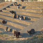 〜猫の集会〜 その開催理由と参加資格