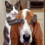 イヌはネコ目(モク)!イヌはネコの仲間なのか