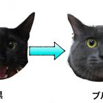 ダイリュート遺伝子〜パステルカラーの猫〜