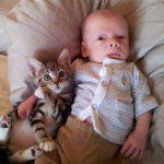 猫と人間の赤ちゃんの付き合い方