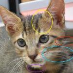 猫のヒゲ 〜洞毛の実力とその謎〜