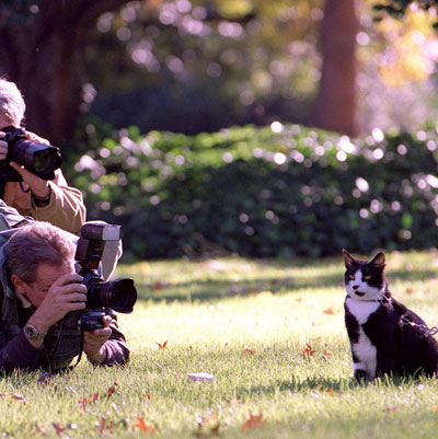 Photos-Socks-First-Cat-Former-President-Bill-Clinton-Chelsea-Clinton-Who-Died-Lung-Cancer-Betty-Currie-Care