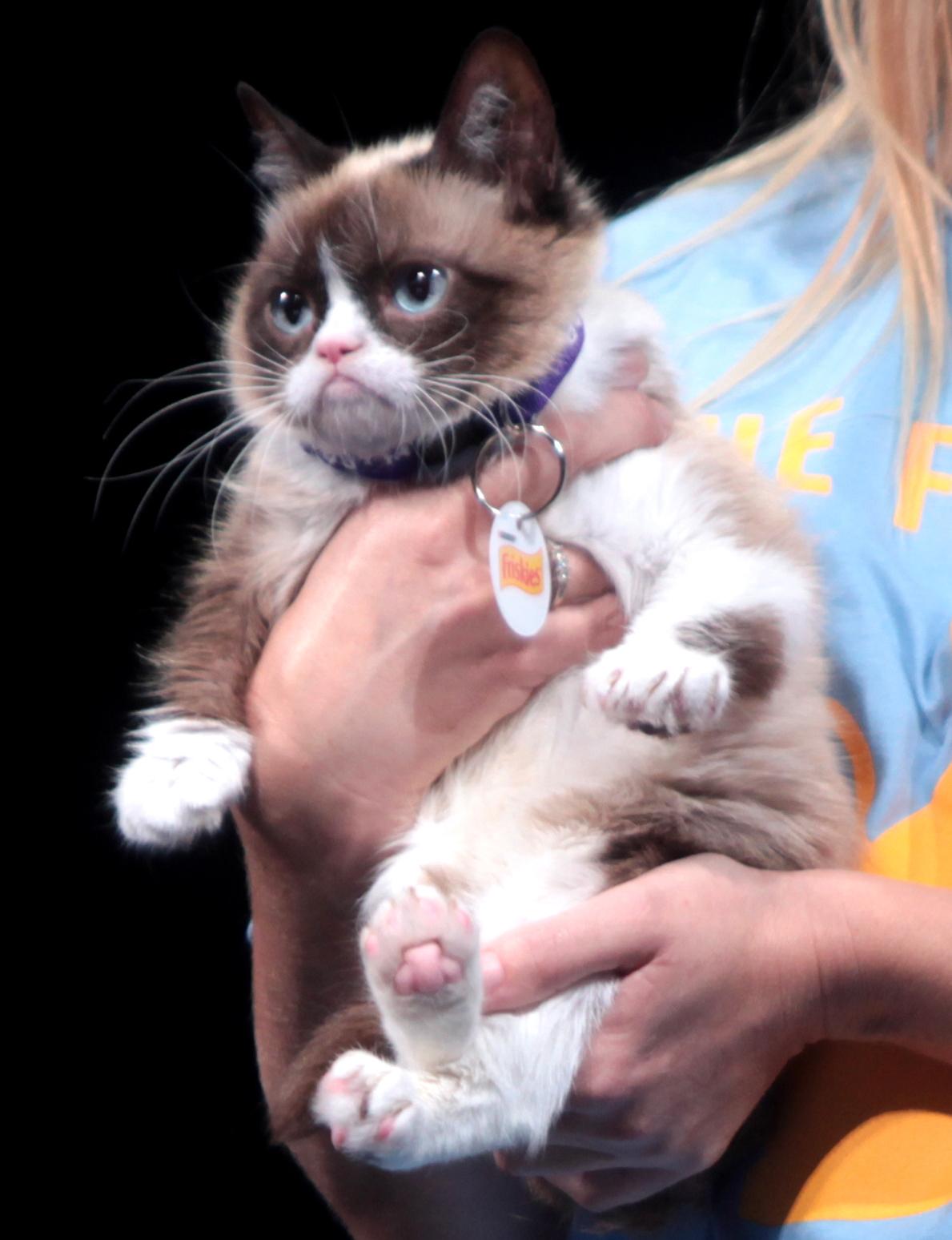 Grumpy_Cat_by_Gage_Skidmore