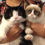 不機嫌顔な猫グランピー〜海外の猫画像掲示板〜