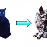 白斑病の猫スクラピー