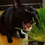 猫にも安全な観葉植物について