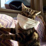 猫に人のインフルエンザはうつりますか?