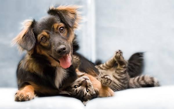 wallpaper-dog-cat-photo-01