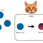 猫伝染性腹膜炎(FIP)のアウトライン