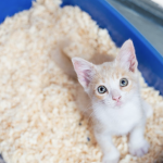 多頭飼育の猫トイレに関する研究 〜あいつのトイレは嫌か〜