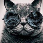 猫エリスロポイエチンの治験