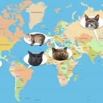 猫の名前ランキング 世界編