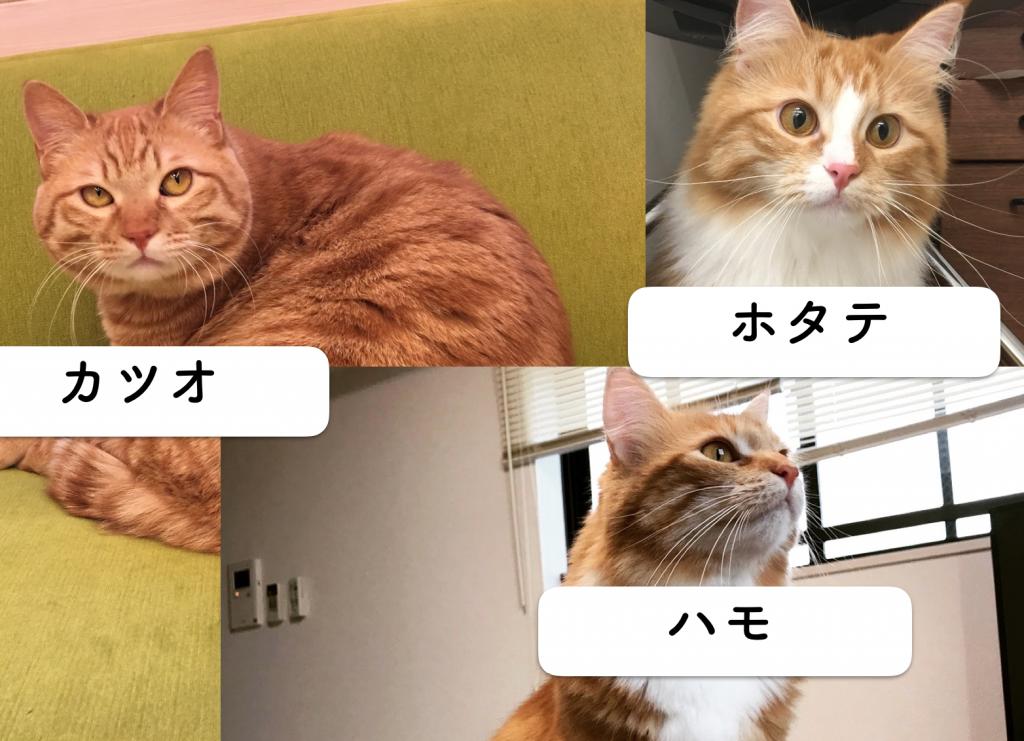 ランキング 名前 猫 の