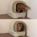 猫における尿検査の重要性