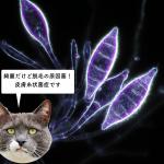 猫の皮膚糸状菌症 ~カビ~