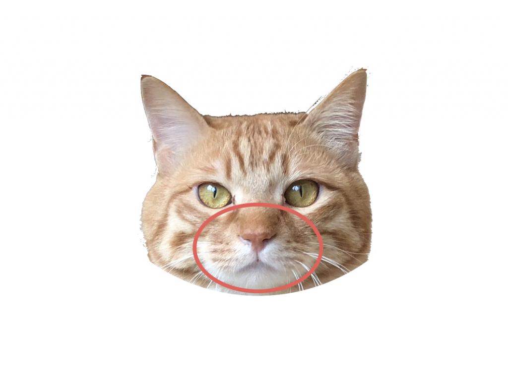 赤丸:マズル Muzzle