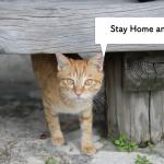 猫オーナーアンケート:抗菌薬に対する認識と使用経験まとめ