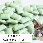 猫にキシリトールを与えた研究
