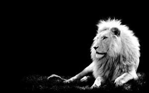 こっともライオン