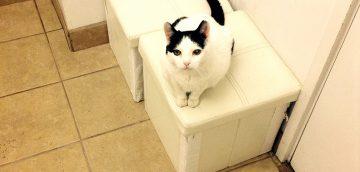 猫の慢性腎臓病(慢性腎不全)のアウトライン