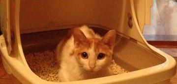 猫の尿路結石のアウトライン