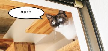 猫の新しい腎臓病の薬 ラプロスについて