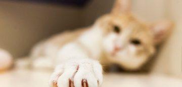 獣医師が教える猫の爪切り必勝法