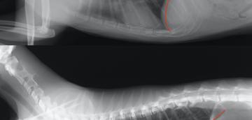 猫の喘息のアウトライン