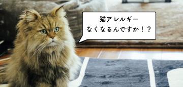 猫アレルギーを解決しうる2つの可能性