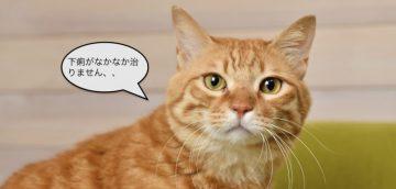 なぜ猫の下痢の診断がなかなかつかないのか